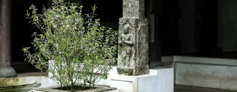 Die Magie von Tulsi oder heiligem Basilikum und Ursolsäure